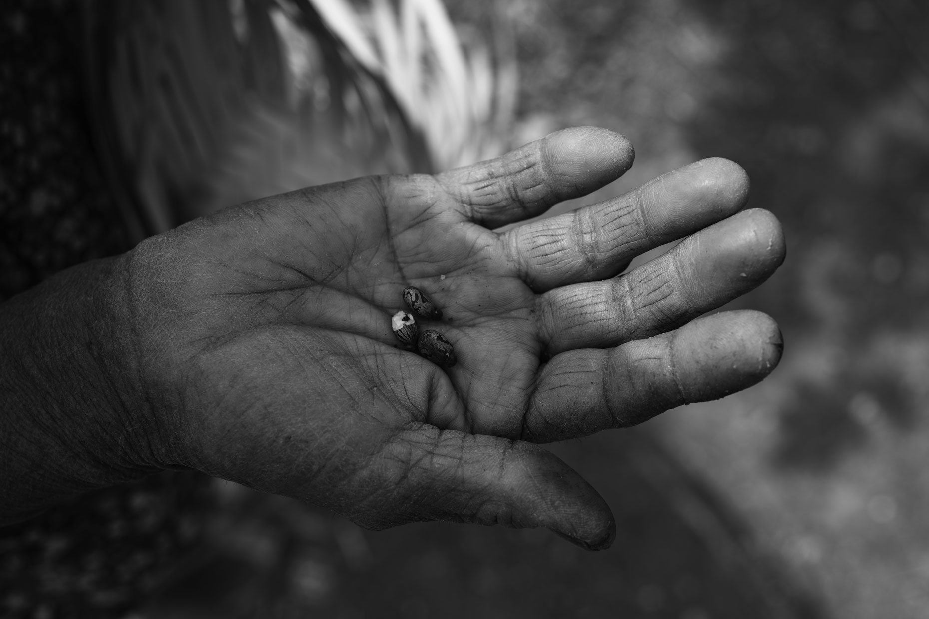 Mexican woman holding seeds in the mountains of Oaxaca